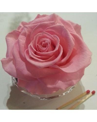 Rose rose préservée