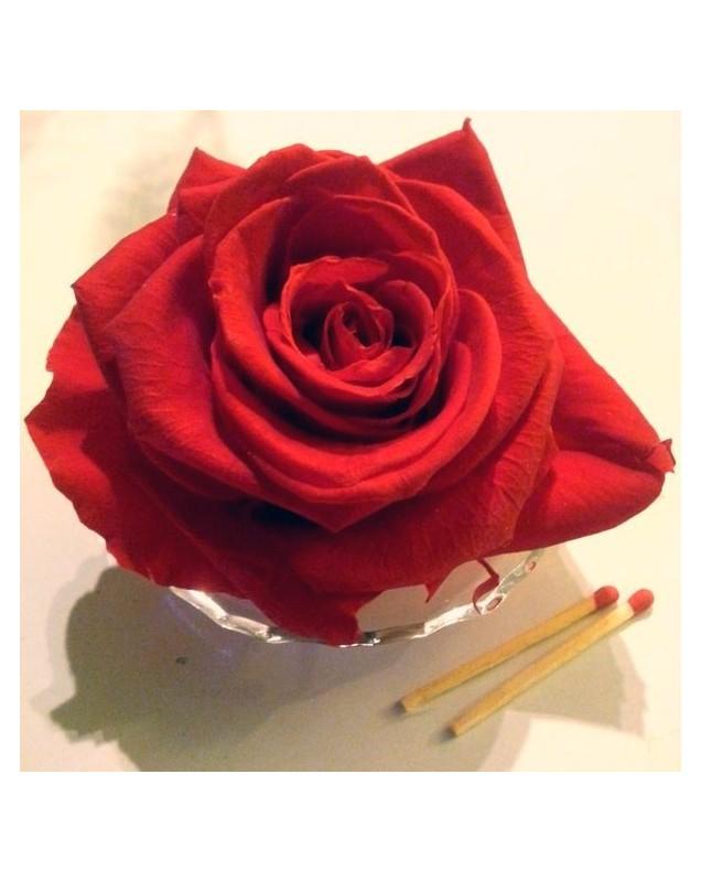 Rose rouge préservée