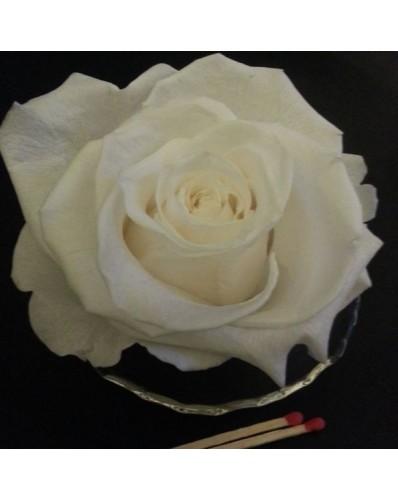Rose blanche préservée