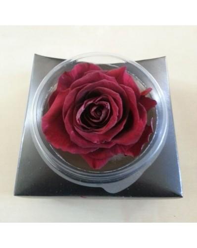 Rose éternelle fuschia