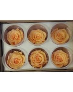 Roses éternelles coffret de 6