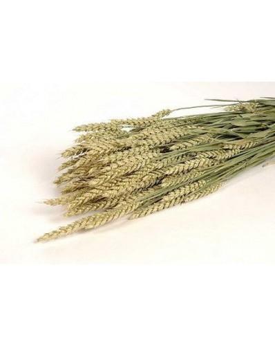 botte de blé