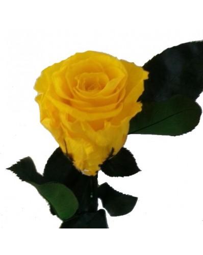 Rose éternelle couleur jaune