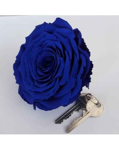 Rose éternelle bleue XXL