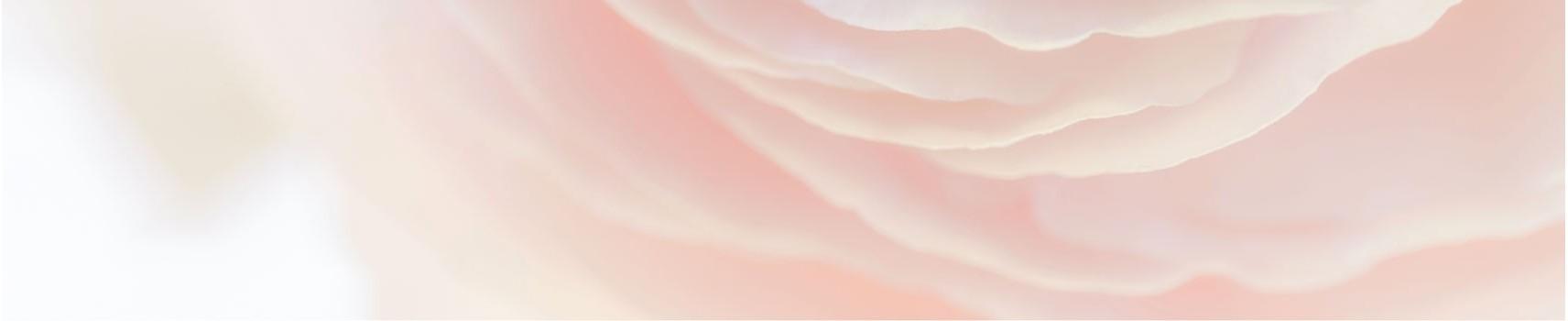 La boutique de rose naturelle ou éternelle au meilleur prix